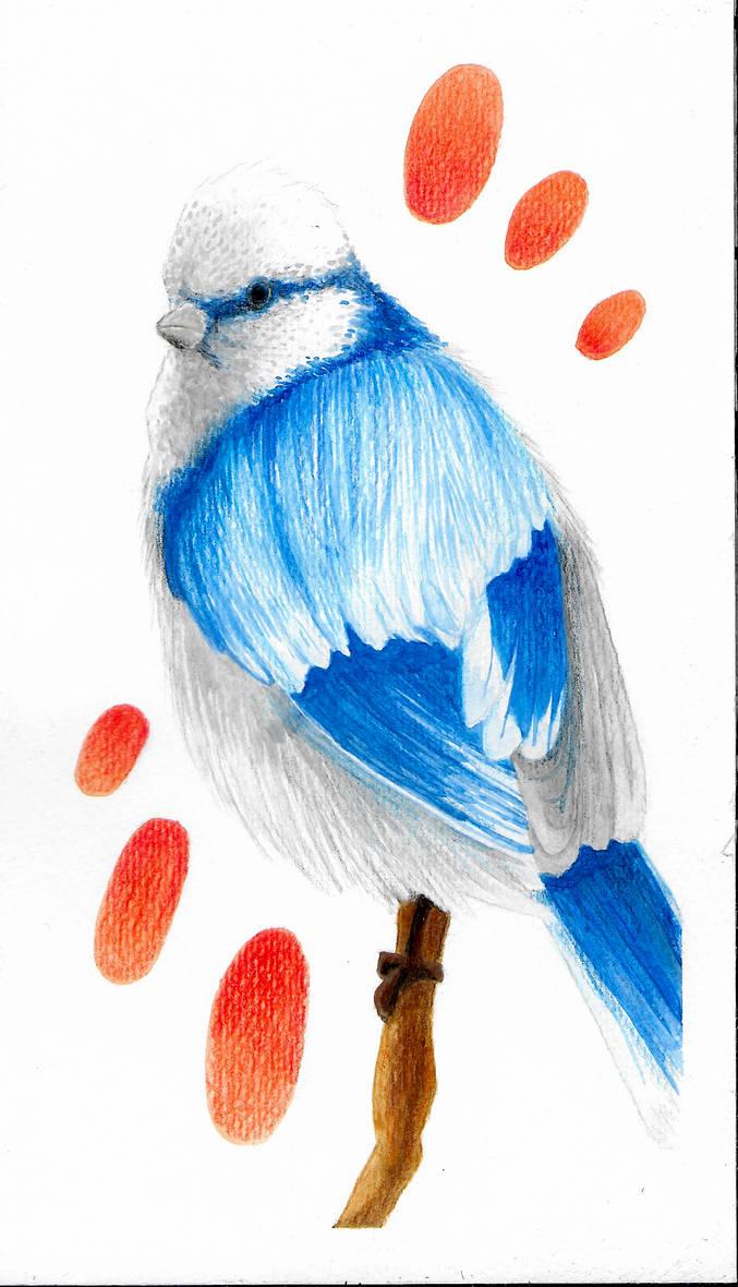 Blue Bird by DredaSM