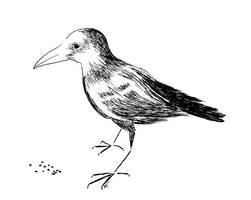 Raven by Gordjia