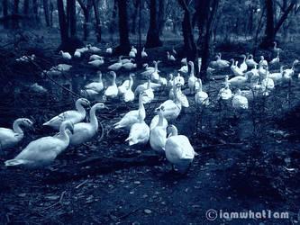 Birds Of Twilight by WalkMyPath