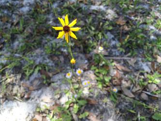 Yellow Flower Macro 1 by TopSideUnder