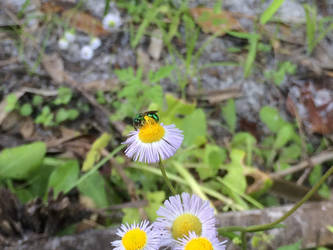 White Flower Macro by TopSideUnder