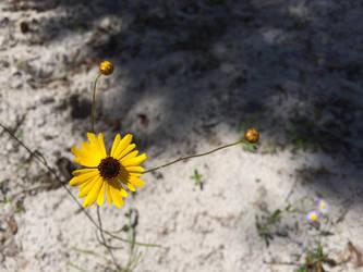 Yellow Flower Macro 2 by TopSideUnder