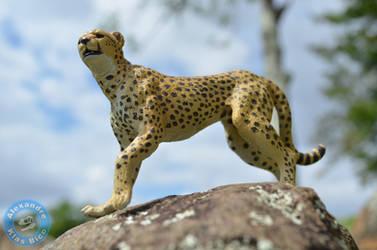 Cheetah (Acinonyx jubatus) by X-Alex