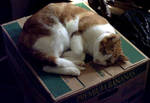A Seth on a Box by Xeroxed-Animus
