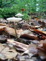 Mushrooms by Leondrian