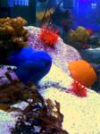 photo of an aquarium again by Maleiva