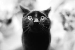 super black cat by formylittleprince