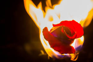 Flames by TJs-Photographs