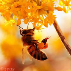 Sweet Nectar. by ZEUS1001