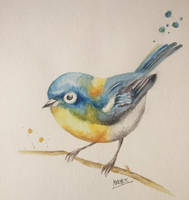 Blue Bird by Sara-Arasteh