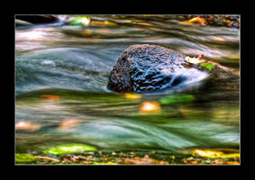 Fall waterflow... by OrisTheDog