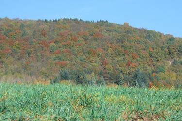 Autumn colors by Dolguldur