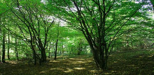 Troll Wood by Dolguldur