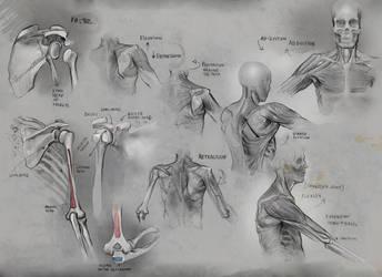 Anatomy2 by mattdonnici