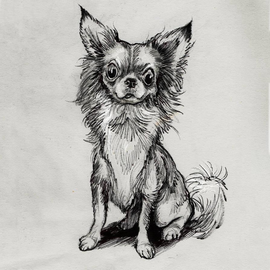 chihuahua by mattdonnici