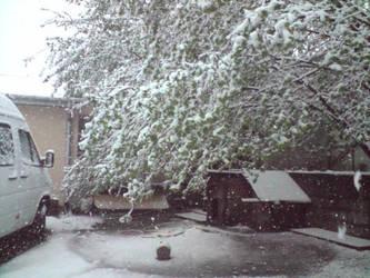 Unexpected winter pt2 by LittleGardener