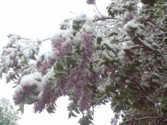 Unexpected winter pt3 by LittleGardener