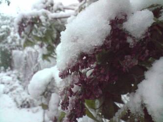 Unexpected winter pt5 by LittleGardener