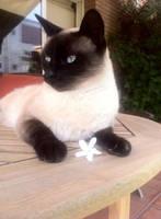Dana cat by Gemiky