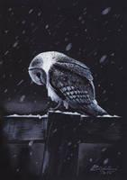 Snowy barn owl by NateesArt