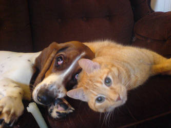My Cat And Dog by hippieman1234