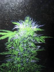 buddy plant old w.i.p by Canvasharris