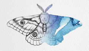 FanArt-Blue Moth by New-Creations-21