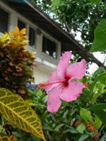 La flor entre las plantas by crisisnyc