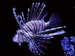 Lion Fish by NathanRosario