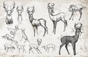 Jay deer form by Detkef
