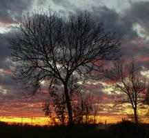 Amazin November Sunset 4 by cactusmumkate