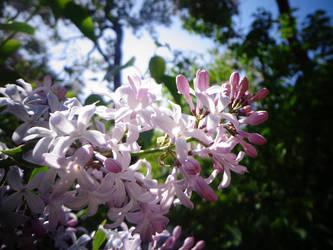 FLOWER#4 by yelyahlover