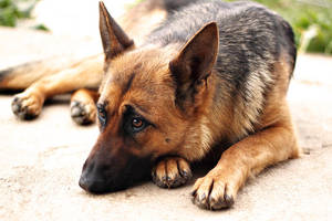 Lora, resting on the ground by kupenska