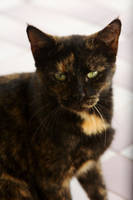 Rusty Kitty by zorinlynx