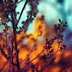 Herbst pt. IV by Gehoersturz