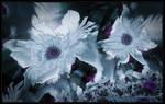 Snow garden by Szellorozsa