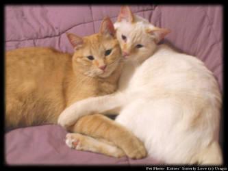 Kitties' Sisterly Love by Usagii