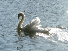 Stock 134: starry swan glide by AlzirrSwanheartStock