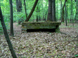 Stock 159: forest ruins 3 by AlzirrSwanheartStock