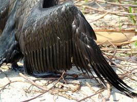 Stock 315: black wing by AlzirrSwanheartStock