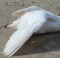 Stock 330: swan wing 3 by AlzirrSwanheartStock