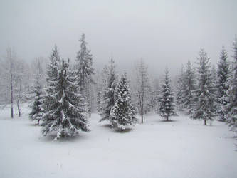Stock 351: winter trees 1 by AlzirrSwanheartStock