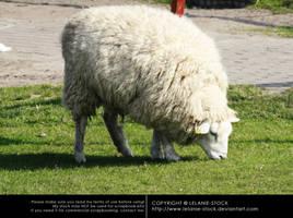 Animals 018 by Lelanie-Stock