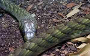 Snake Wallpaper by drakered