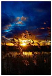 Golden Sunset... by XipnosS
