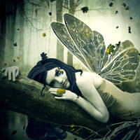 night fairy by brovic