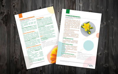 Kantoron Kalendula information Brochures by ziyade