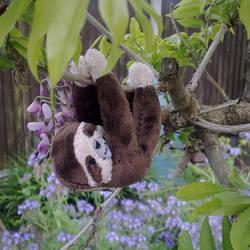 Tiny Sloth by AshFantastic
