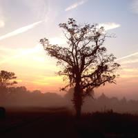 Morning Has Broken by Waxmanjack