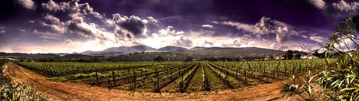 Valley of wine by frozennightfall
